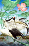 Red-crowned Cranes Triptych-Preening