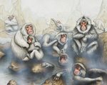 Snow Monkeys in a Hotspring